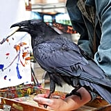 As the Crow Paints