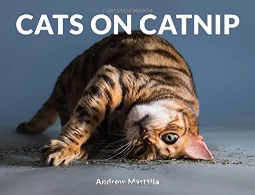 Cats on Catnip