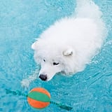 Interactive Squeaky Rope Ball Dog Water Toy