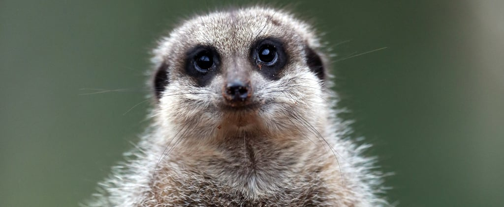 Meerkats Eat Cockroaches Named After Exes on Valentine's Day