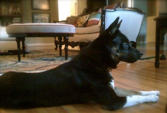 New Puppy Alert! Dianna Agron's Rescue Pooch