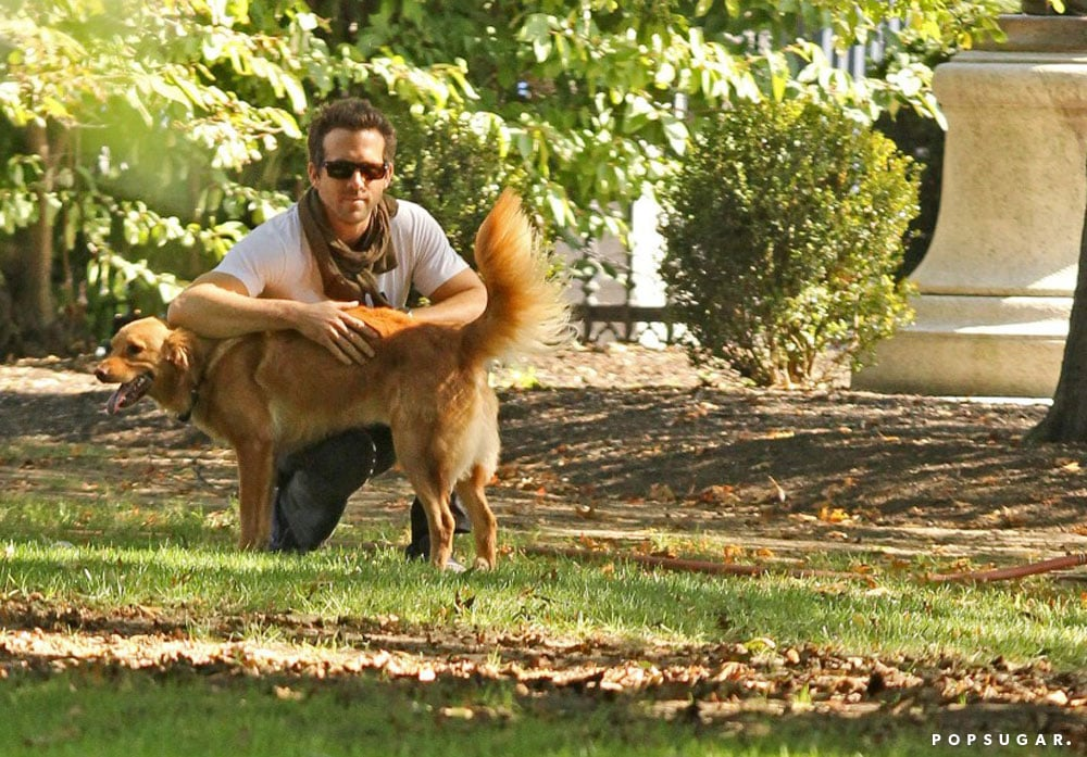 Ryan Reynolds leaned on his pal, Baxter, during a walk in Boston in September 2011.