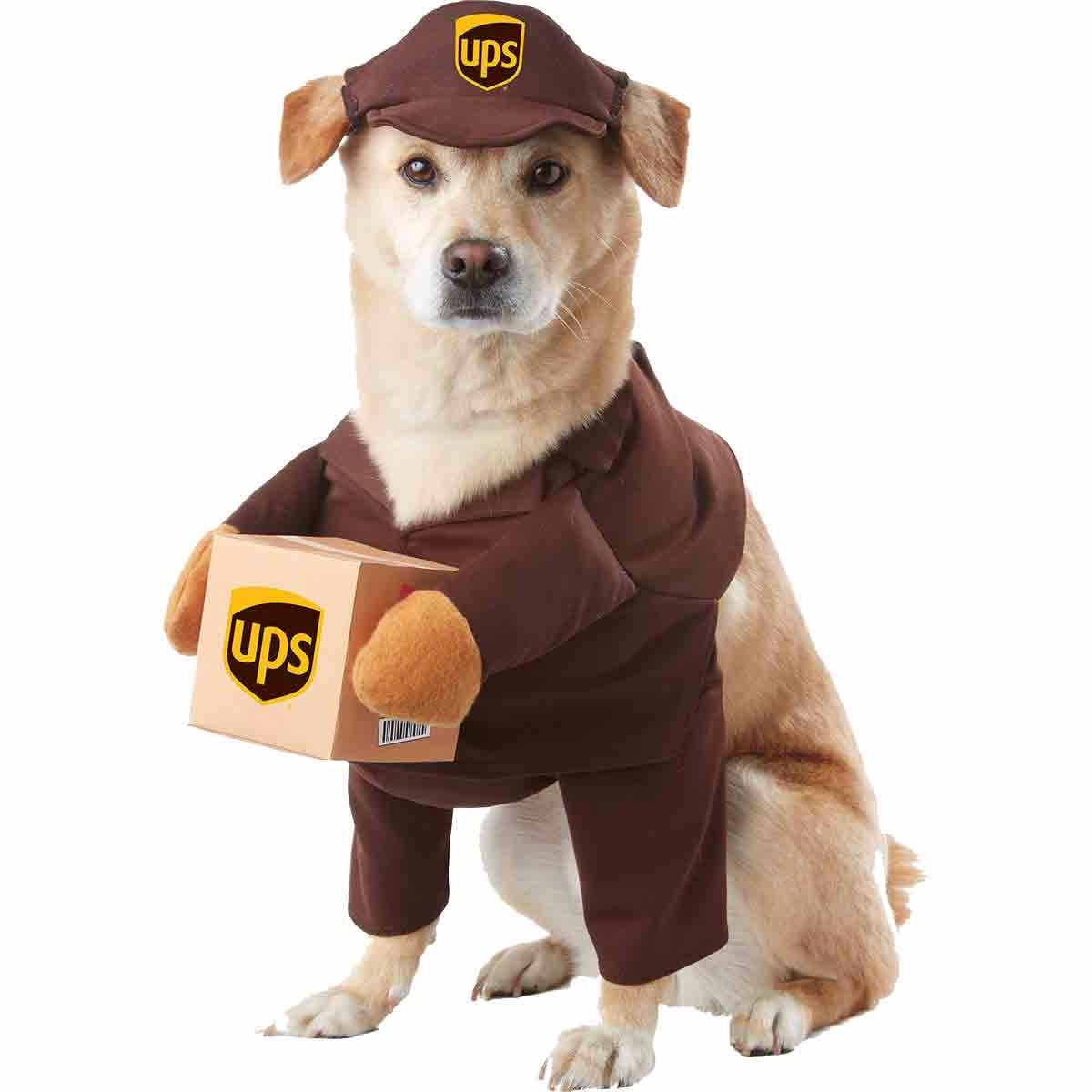 Pet Costumes. Halloween  sc 1 st  Popsugar : pets costumes halloween  - Germanpascual.Com