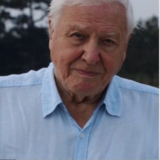 Sir David Attenborough Joins Instagram at the Age of 94