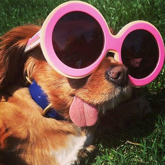 Hund Toast gibt Mode-Tipps