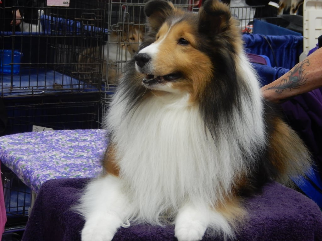 What It's Really Like Backstage at the National Dog Show