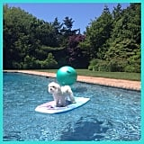 Pool Decor Should Be Canine Friendly