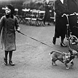 The Royal Pets