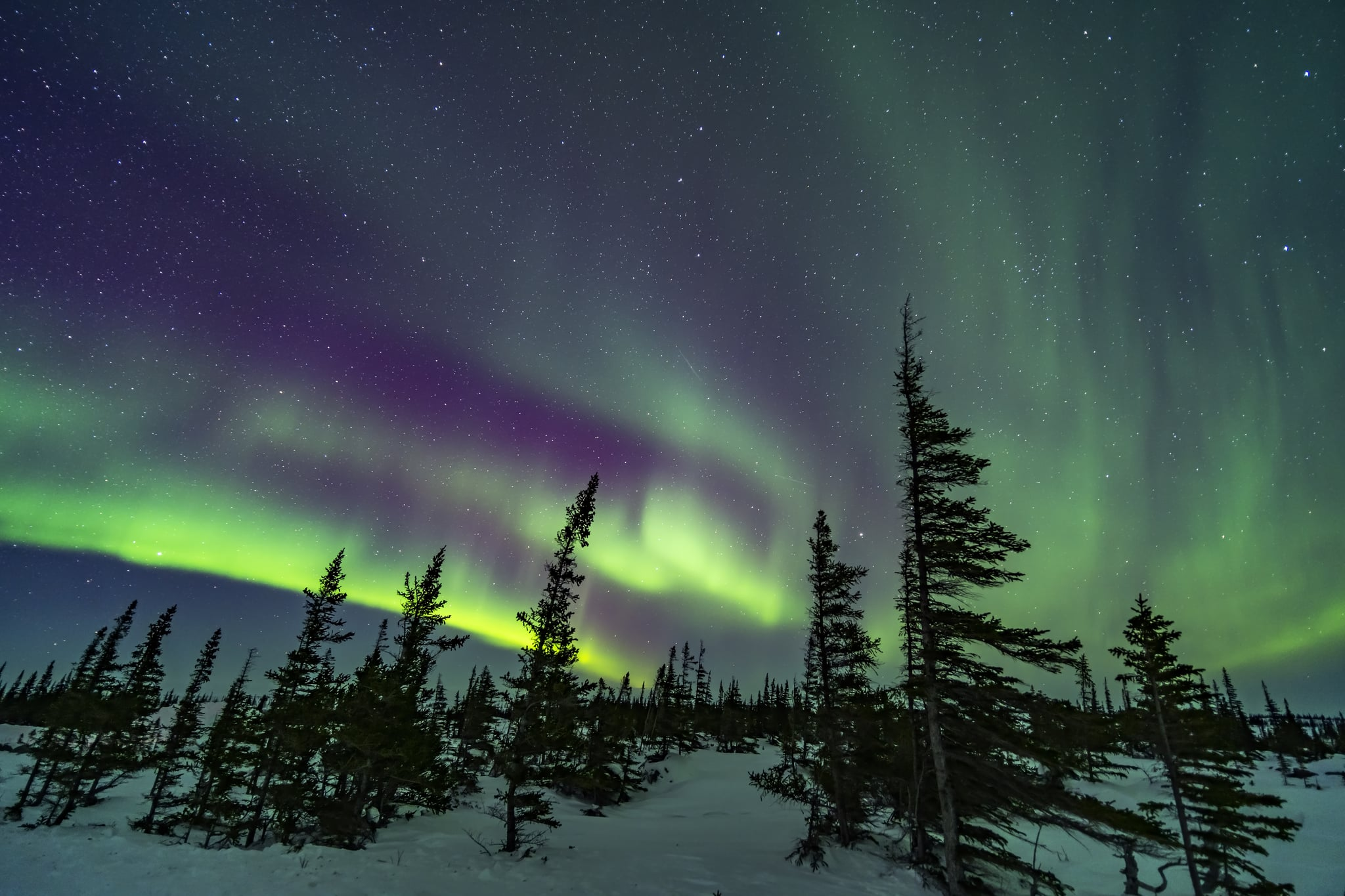 A colourful aurora over the wind-shaped trees of the boreal sub-Arctic forest at the Churchill Northern Studies Centre, March 18, 2020. Arcturus is rising between the two trees right of centre. This is a single 15-second exposure at f/2 with the Venus Optics 15mm lens and Sony a7III at ISO 1600. (Photo by: Alan Dyer/VW PICS/Universal Images Group via Getty Images)