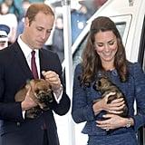 William and Kate met German Shepherd police training pups in New Zealand in April 2014.