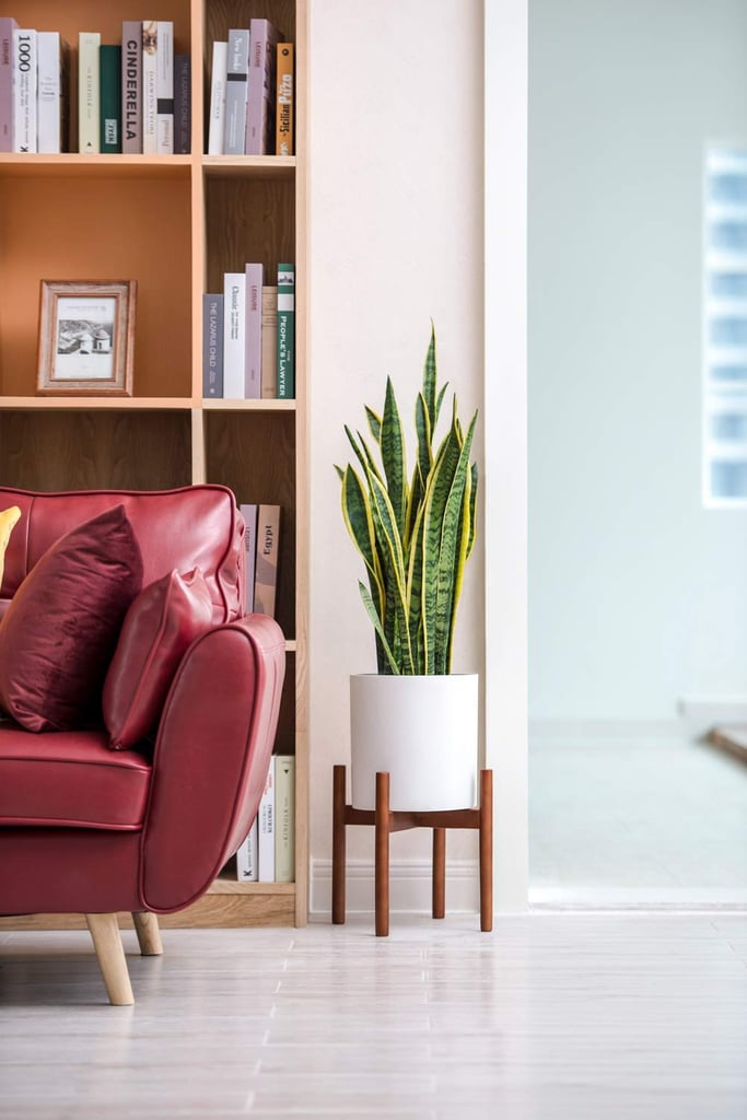 This Plant Stand From Amazon Transformed My Small Apartment — For Just $22!