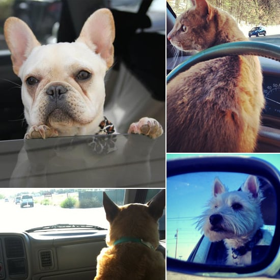 Dogs and Cats in Cars | Pictures