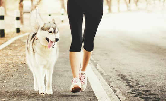Why Tiring Your Dog Out With Exercise Before Training Is a Mistake