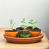 Citrus Planters