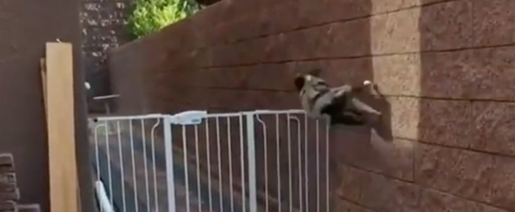 Australian Shepherd Uses Parkour to Jump Over Fence | Video