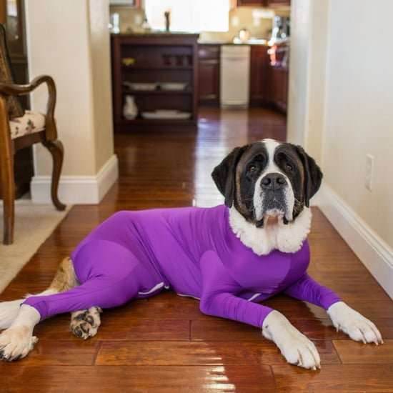 Shed Defender Dog Leotards