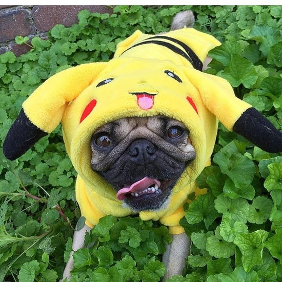 Image result for dogs dressed like pokemon