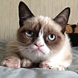 Grumpy Cat wasn't impressed with February. Source: Instagram user grumpycat