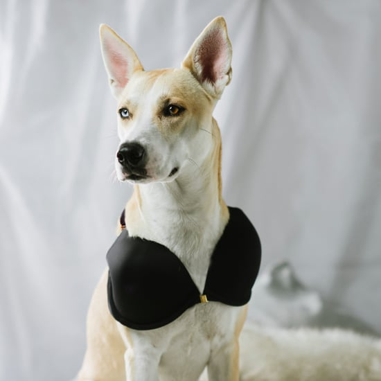 Bra For Dogs