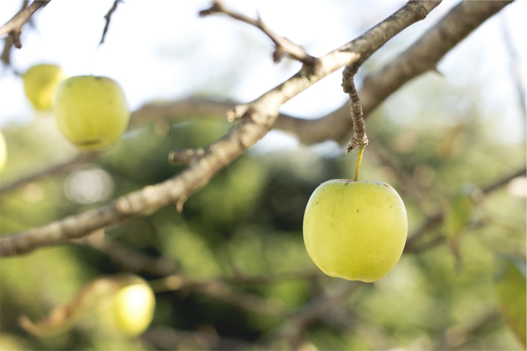 Isaac Newton discovered gravity when an apple fell on his head.