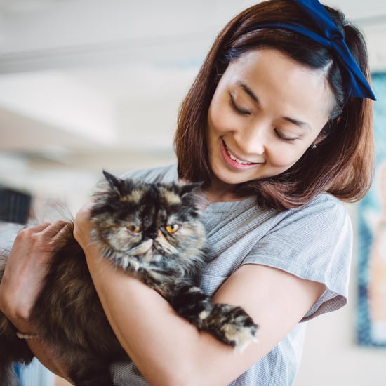 Which Cat Breed Are You By Zodiac Sign