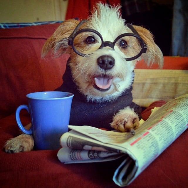 Meet Instagram's Happiest Dog: Ginny!
