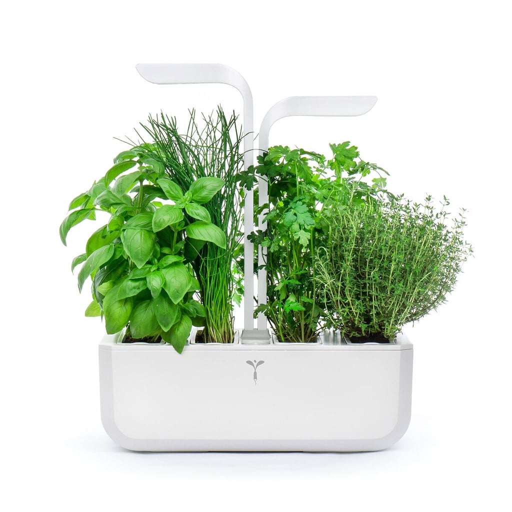 LED Self-Watering Multi-Herb Garden