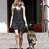 Kate Bosworth's dog had a bandage on her paw.