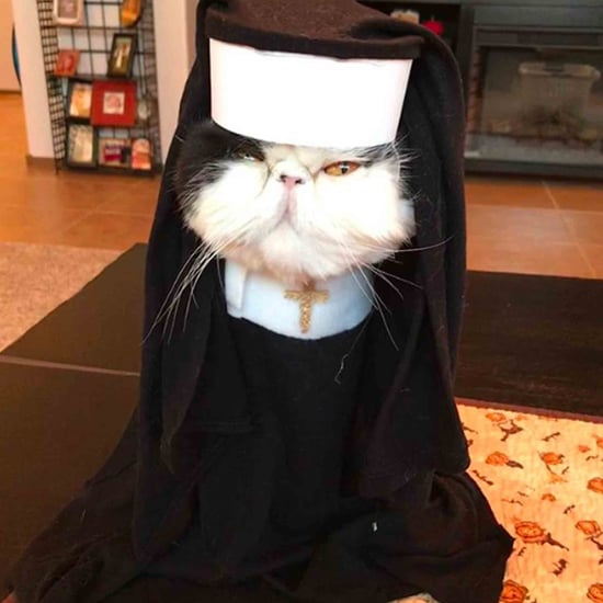 Persian Cats Wearing Halloween Costumes