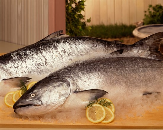 FDA Reviews Genetically Engineered Salmon
