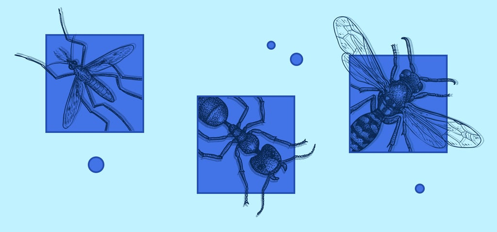 How to Deal With Household Bugs