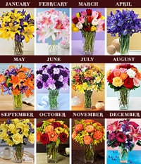 Sugar Shout Out: Win Twelve Months of Flowers!