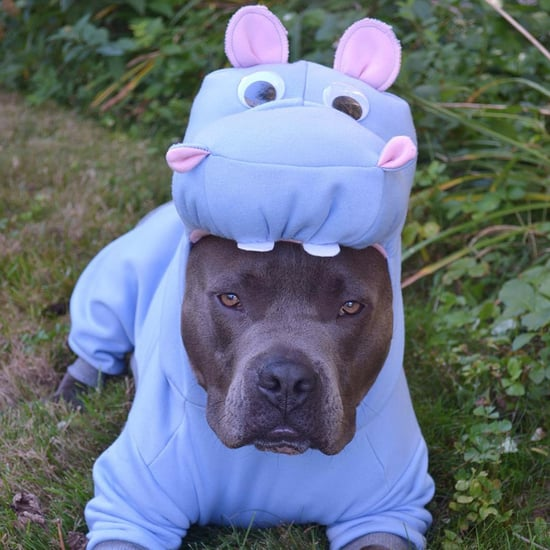 Pit Bull Halloween Costumes