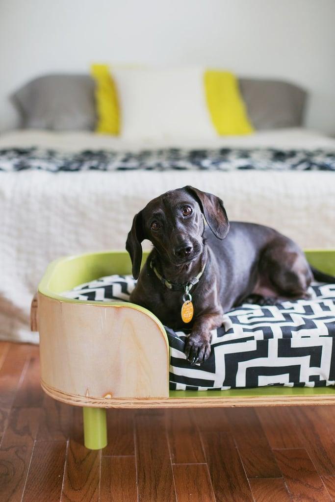 Pet Sponges for Upholstered Furniture