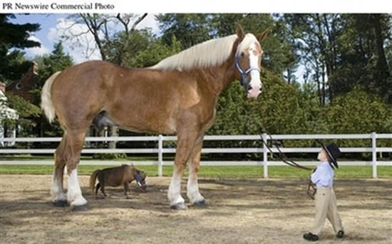 Cute Alert: Tiny Horse, Meet Giant Horse