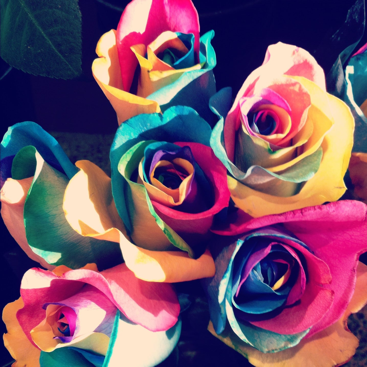 make a rainbow rose 100 things to do before you die