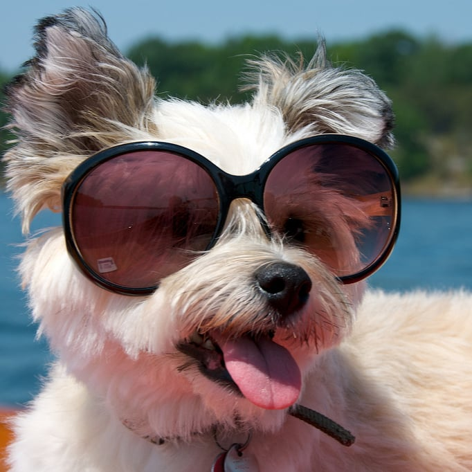 29 Supercool Dogs in Shades