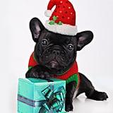 Santa's Cutest Elf