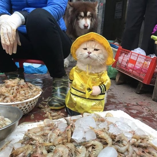 The Cat Named Dog From Vietnam