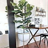 Then one night while Instagram scrolling, I stumbled across a comment thread where a blogger generously confessed to having a fake fig tree. I began to skim the comments section every time I spotted a fiddle leaf fig tree, and guess what? So many people were admitting to the faux tree route and sharing sources!