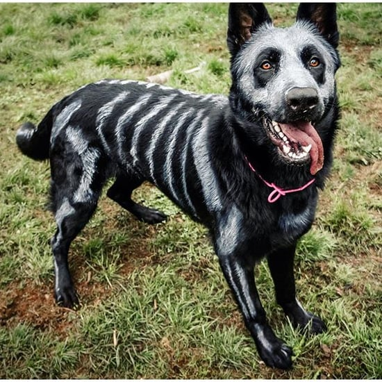 Pet halloween costumes popsugar pets diy halloween costumes for dogs solutioingenieria Gallery