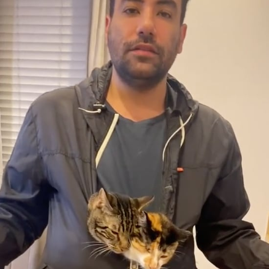 Cats Doing Human Activities With Dad | TikTok Videos