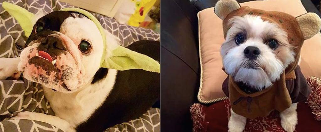 أزياء كلاب مستوحاة من فيلم حرب النجوم
