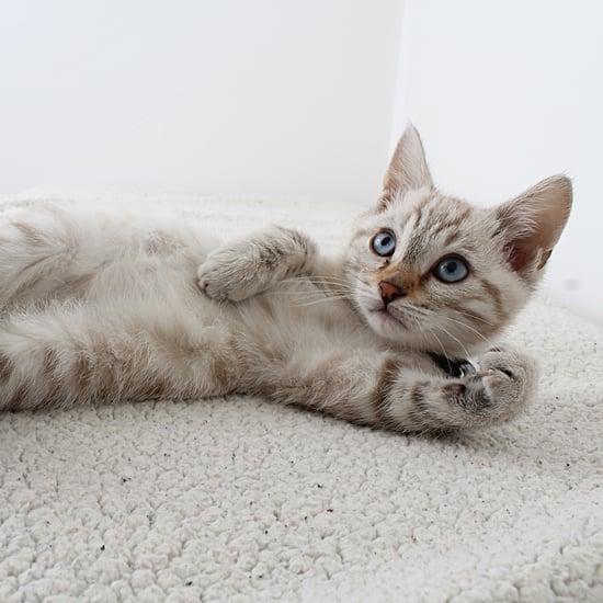 Is My Cat Ticklish?