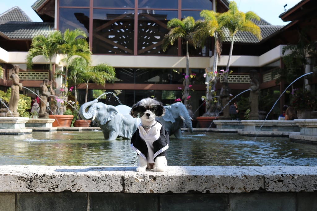 I checked into the pet-friendly Loews Royal Pacific Resort at Universal Orlando. This resort gives you major aloha vibes and also has a fancy Loews Pet Package so I am completely taken care of!