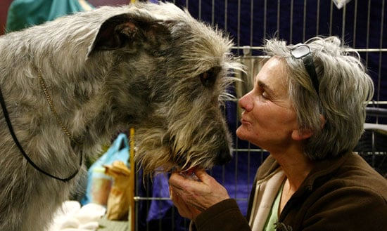 Photos from 2009 Westminster Kennel Club Dog Show