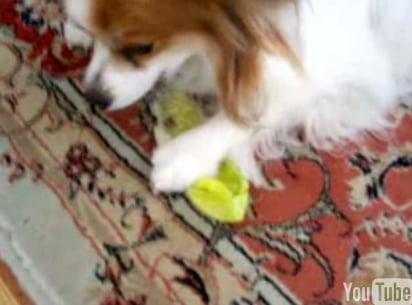 Dog Loves Lettuce