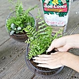 Soil and Potting