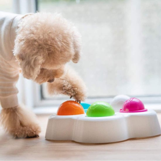 The 15 Best Dog Puzzle Toys