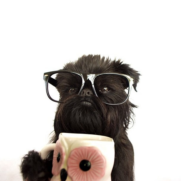 Most Stylish Dogs on Instagram